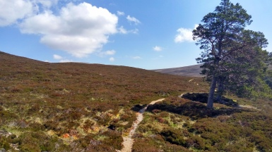 Glen Quoich singletrack