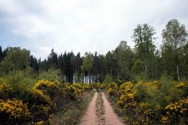 Birse Forest
