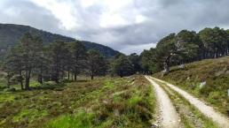 Ballochbuie Forest